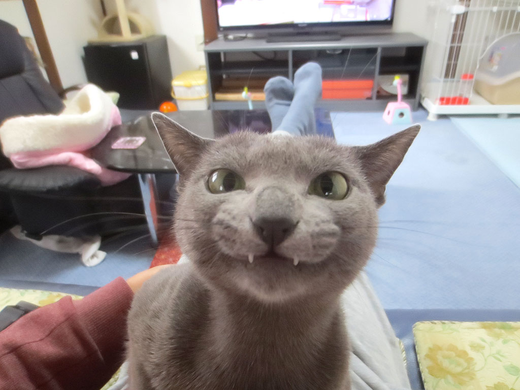 ロシ子の面白い顔。