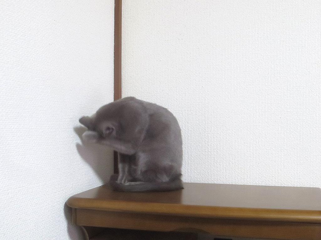 食べ終わったら、猫ポーズ。