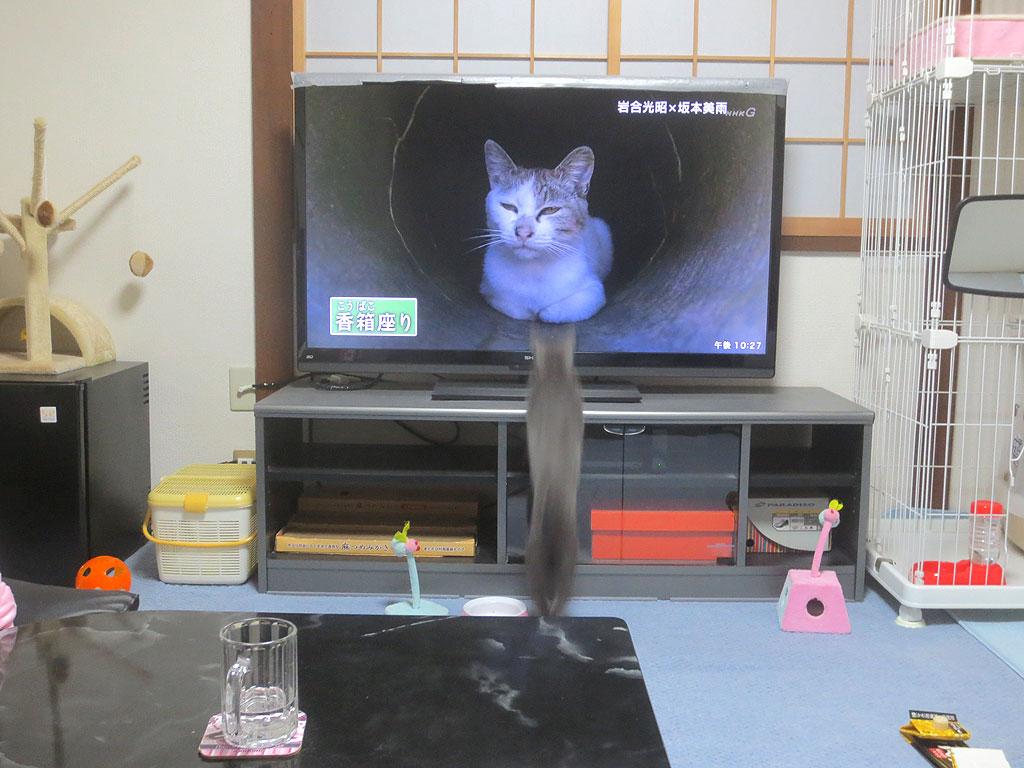 テレビに向かうロシ子。