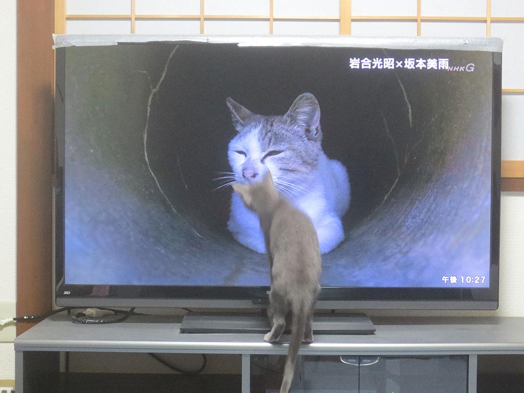 テレビの中の猫に近づくロシ子。