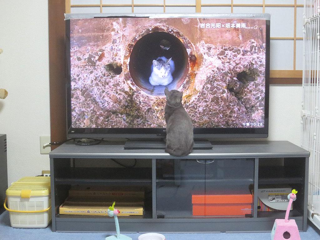 テレビの中の猫に興味を持つロシ子。