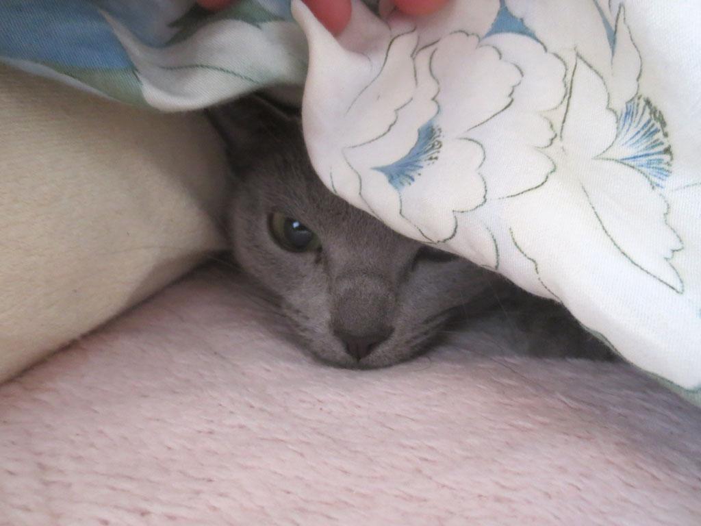寝起きの顔がかわいのです。