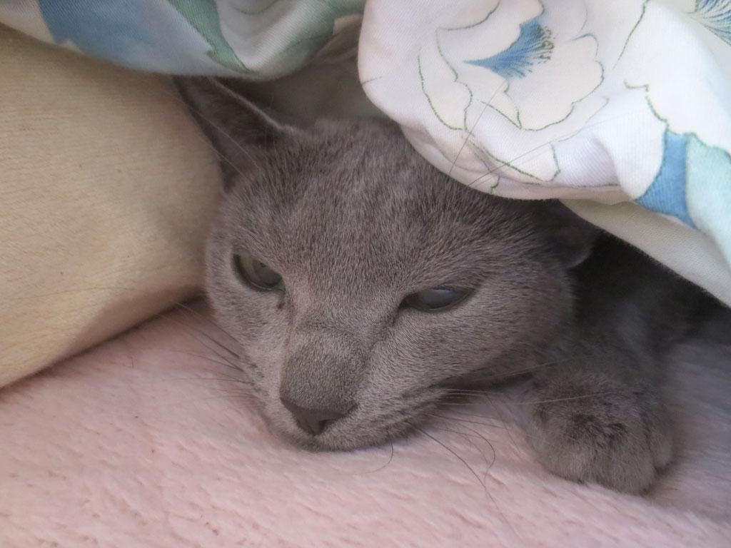 まさしく、寝起きの顔のロシ子。
