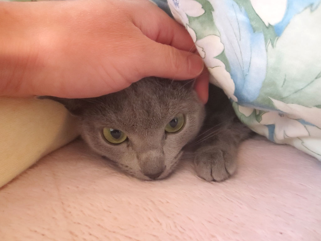 ロシ子の頭を撫でてます。