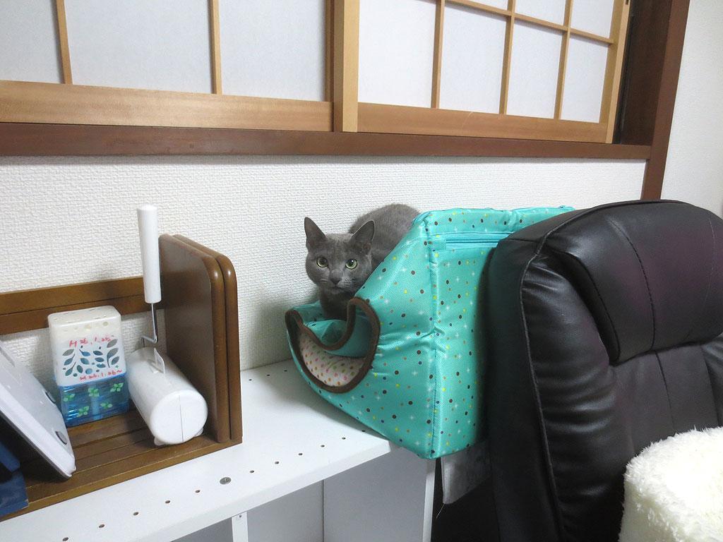 特性猫ベットを潰すロシ子。
