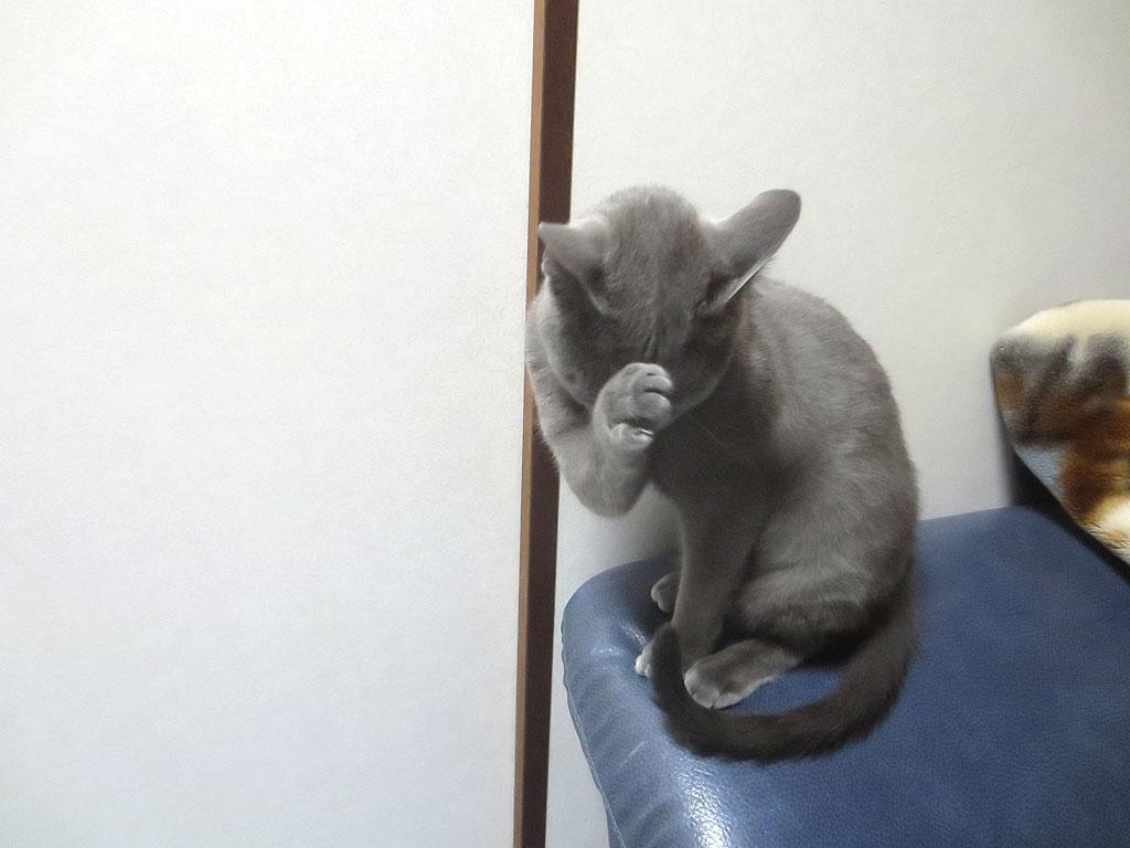 満腹になり、猫ポーズのロシ子。