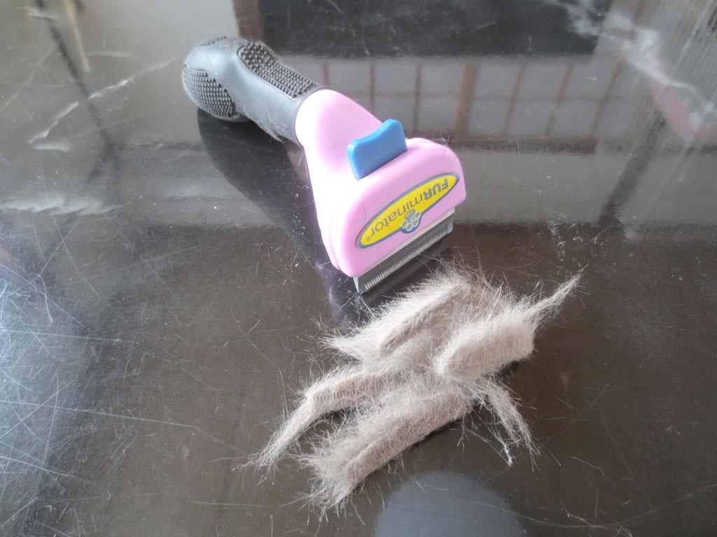 ロシ子の毛の抜け具合。