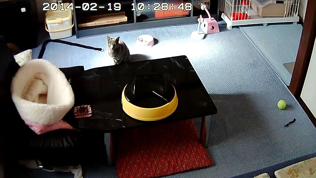 Webカメラで、ロシ子の様子を。
