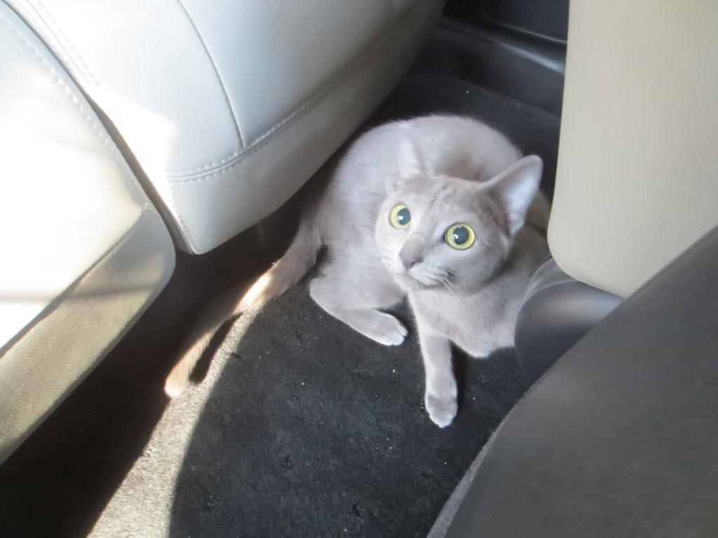 車内を探索するロシ子。