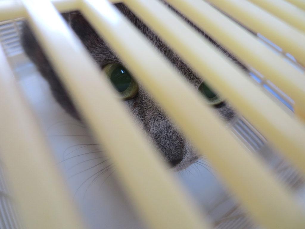 籠の中からこっちを見るロシ子。