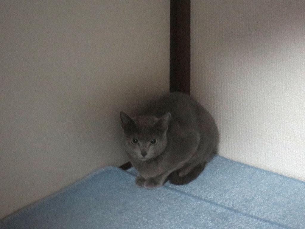 部屋の隅っこに行ってしまったロシ子。