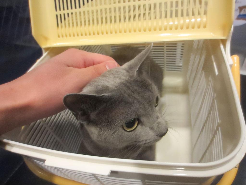 動物病院の待合室でのロシ子。
