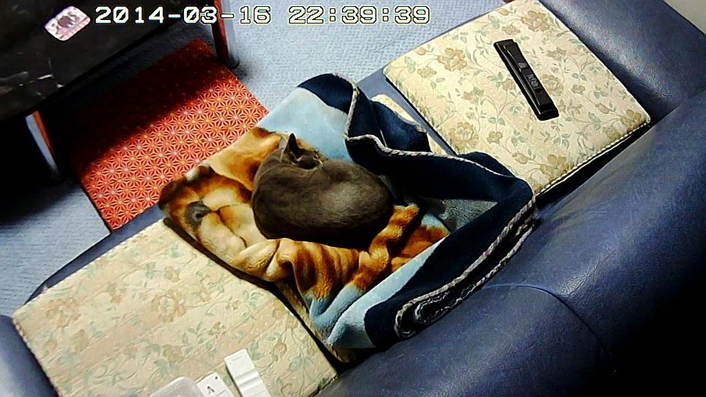 温かい毛布の上で眠るロシ子。