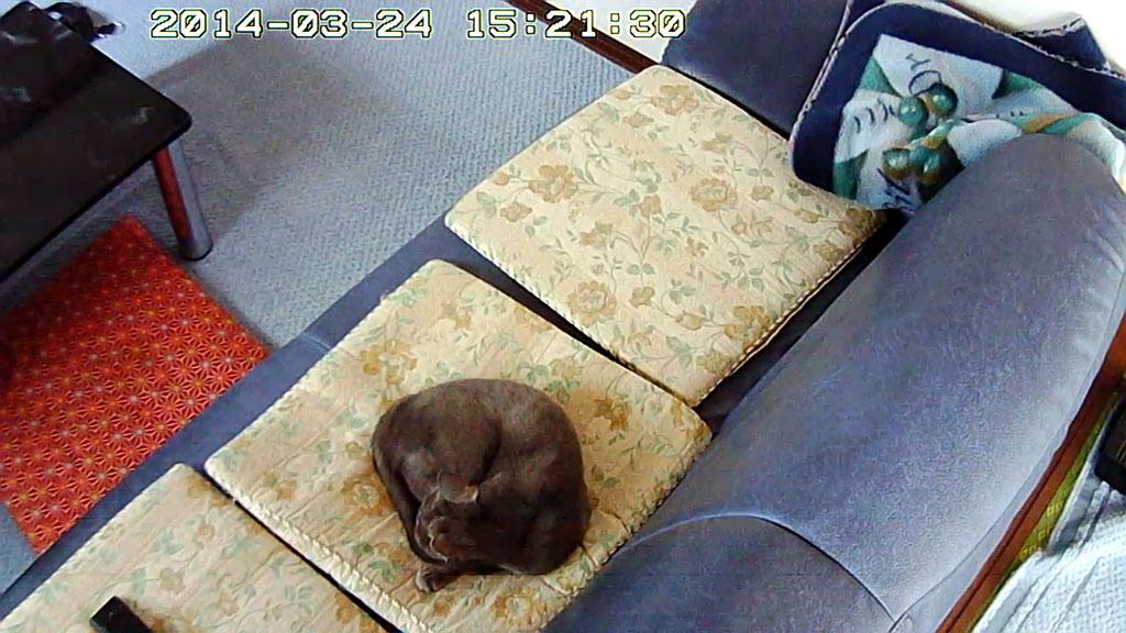 最近のロシ子の寝場所です。