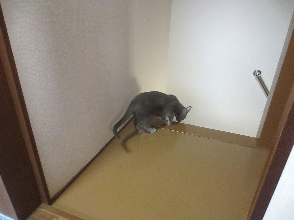 階段を発見したロシ子。