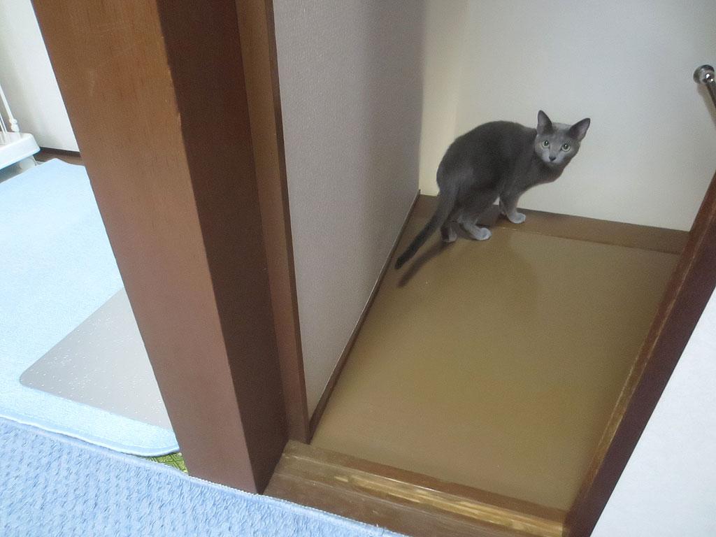 少しずつドアを閉めている私。