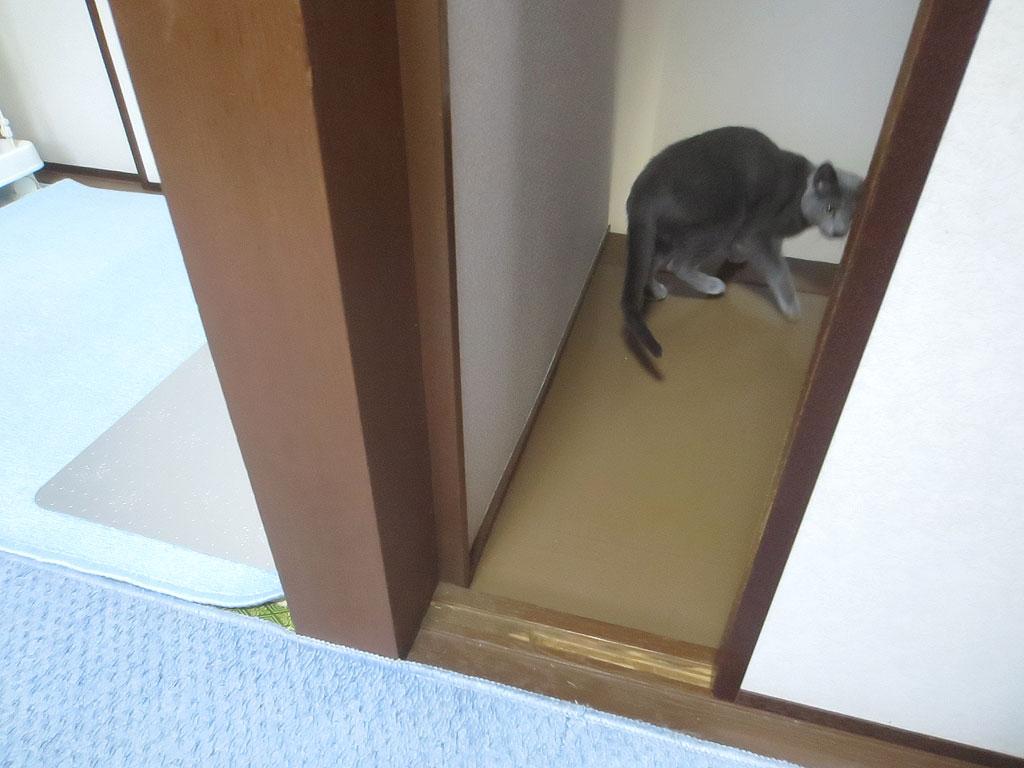 ドアが閉まるのに気付いたロシ子。