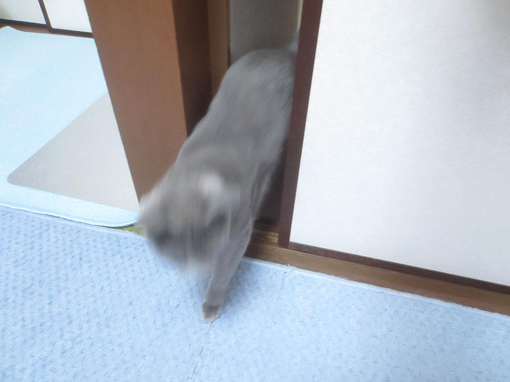 ドアをすり抜けるロシ子。