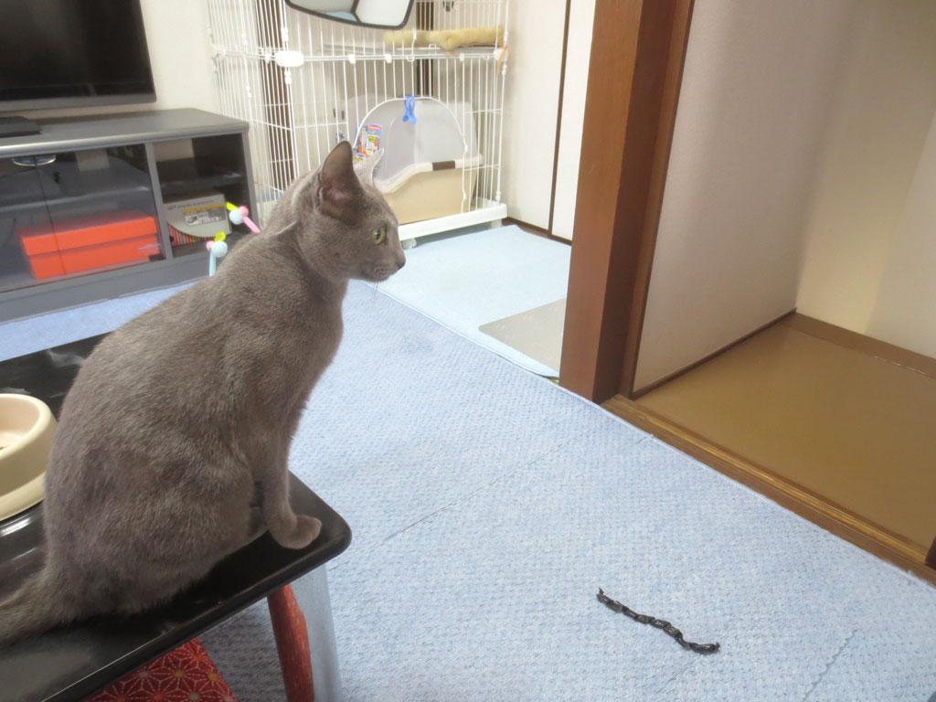 空いてるドアの方を見るロシ子。