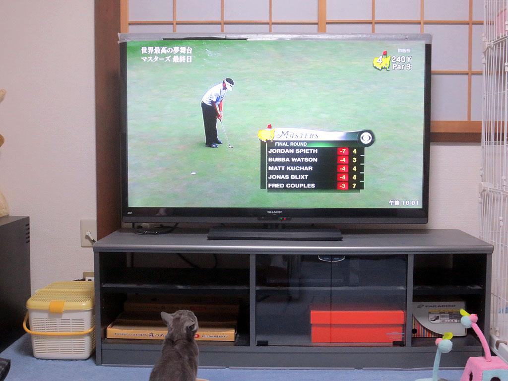 テレビのゴルフに興味津々。