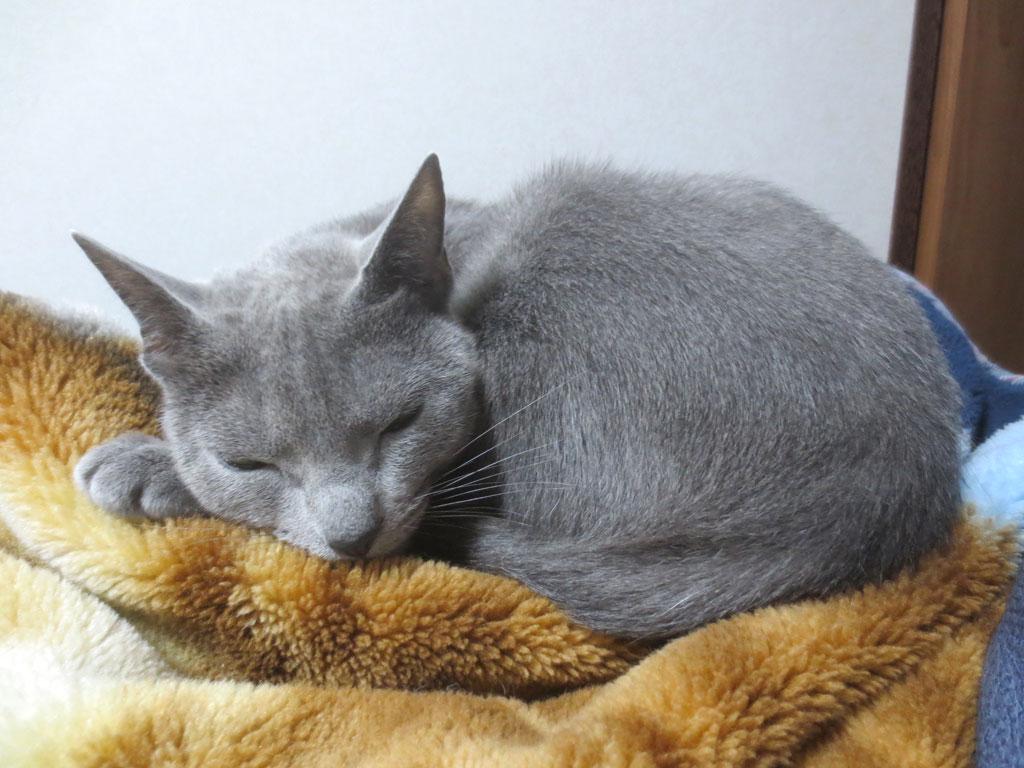 お眠いのロシ子。