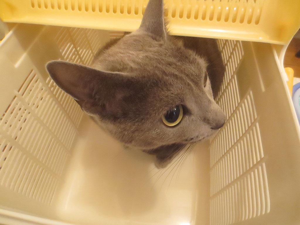 お風呂場に付きました。