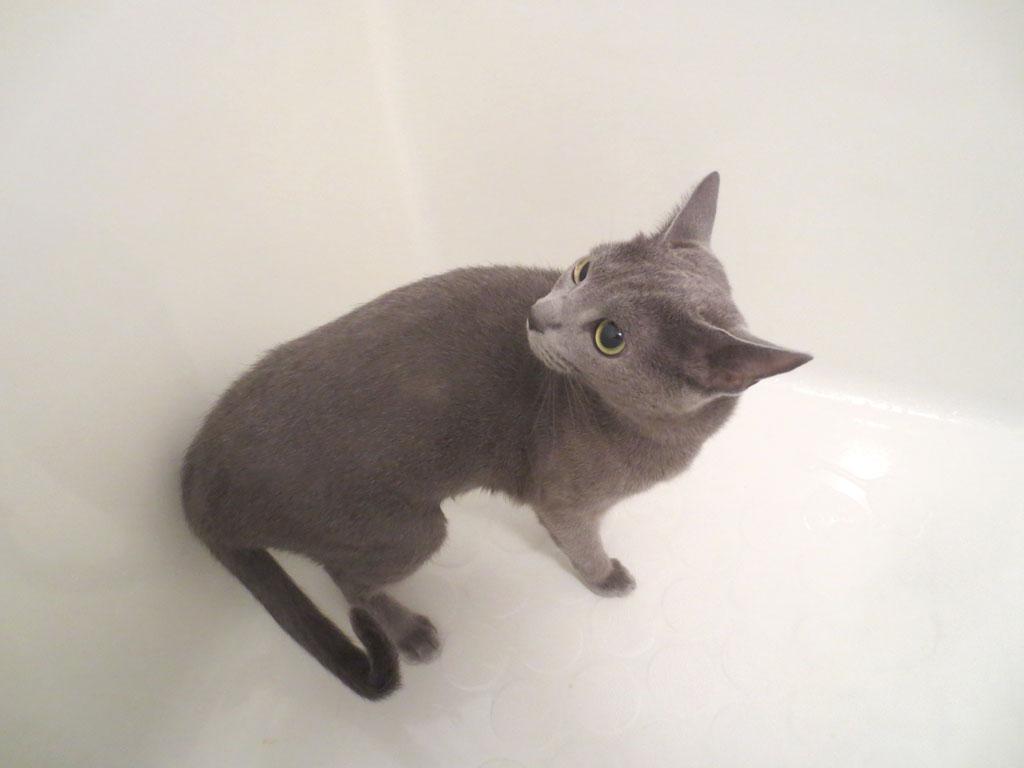 浴槽にロシ子を入れました。