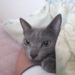私の腕枕で寝るロシ子。