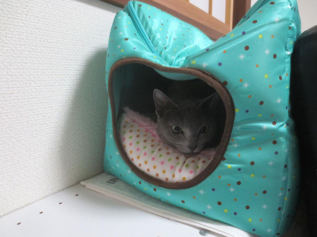 まだ特製猫ベットで寝ています。