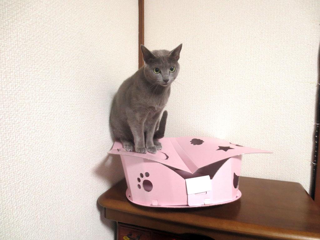 可愛い猫ちゃんです。