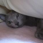 ロシ子の寝起きを直撃しました。