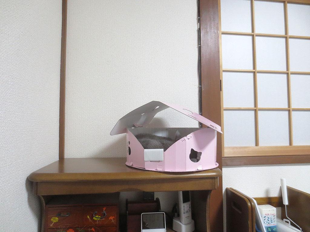 段ボールハウスの中で寝るロシ子。