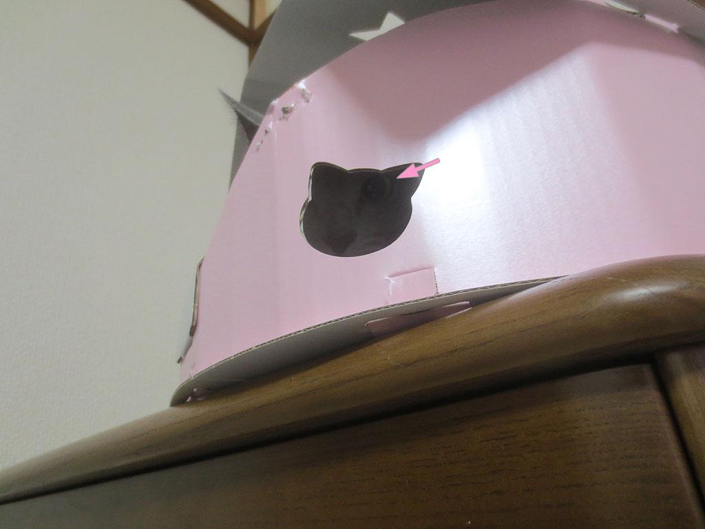 穴からこっちを覗くロシ子です。