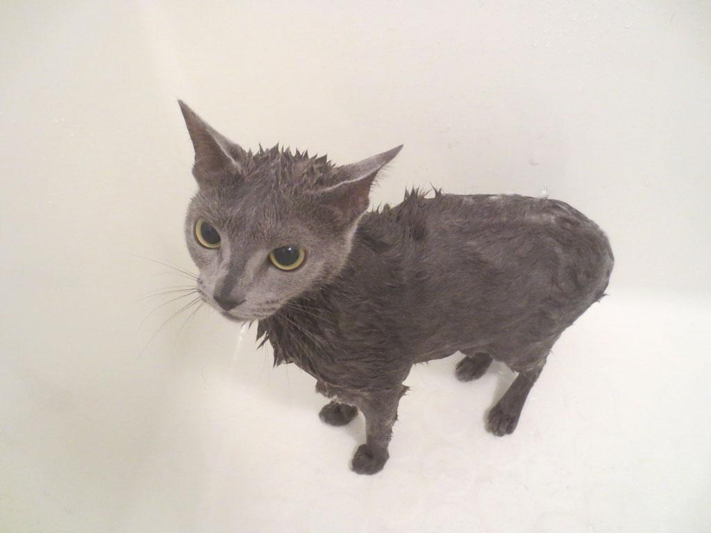 いつもよりしっかり洗いました。