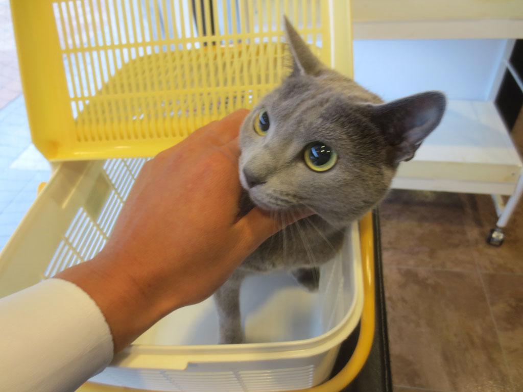 動物病院に着きました。