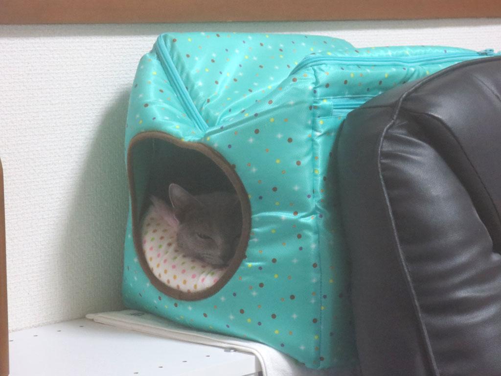 特製猫ベットでお休みのロシ子。