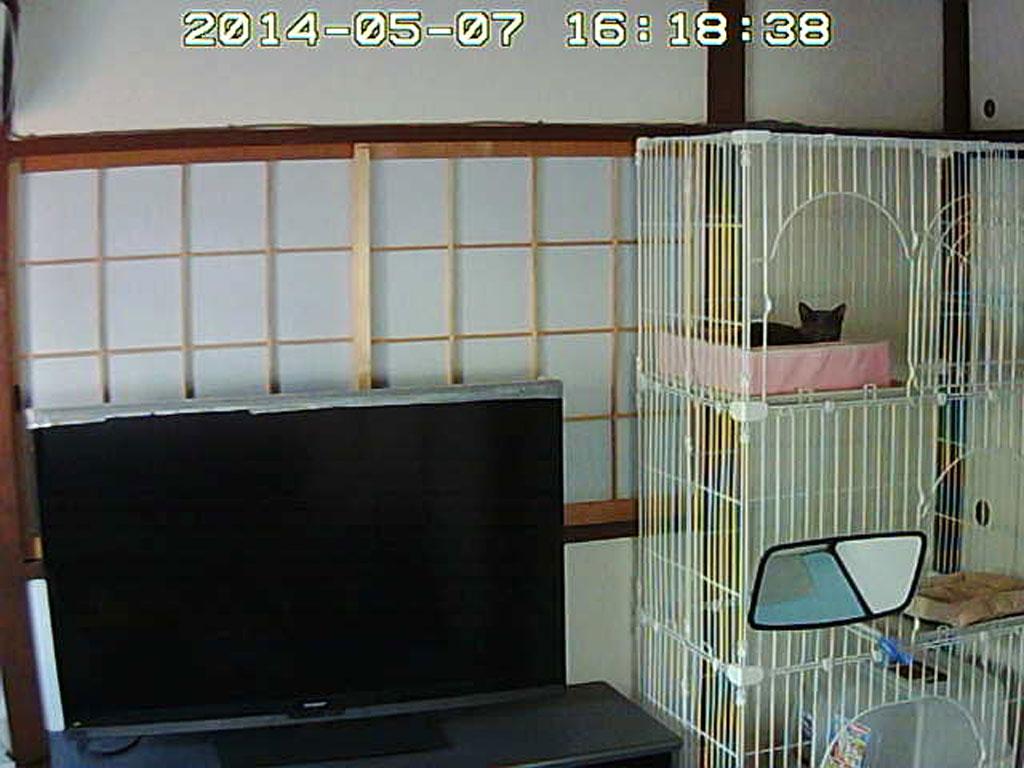 ロシ子、寝ています。