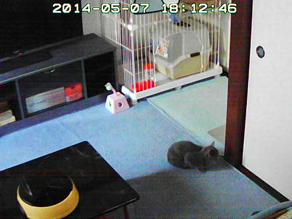 ロシ子が戸の前で座っています。