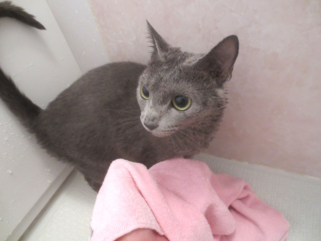 タオルで拭きます。