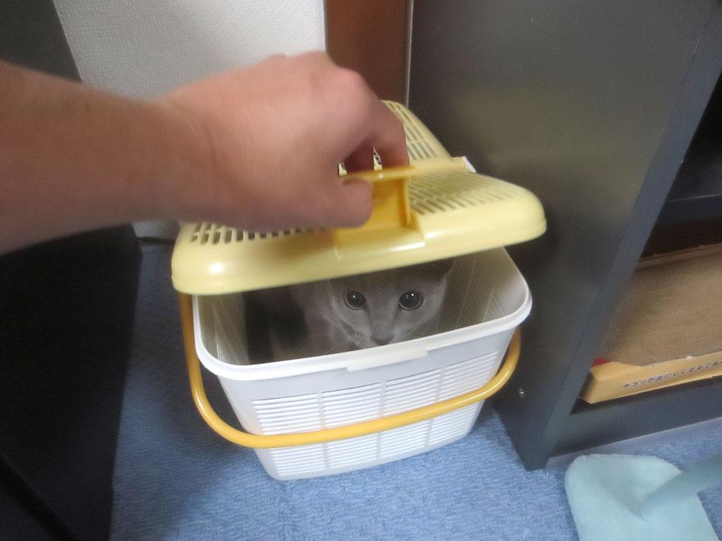 動物病院から帰って来たロシ子。