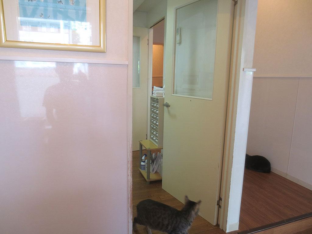 動物病院の中。