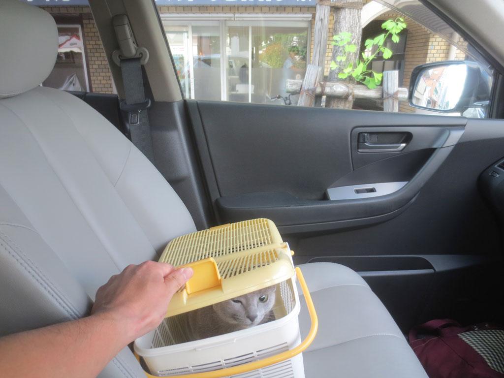 動物病院前の車中のロシ子。