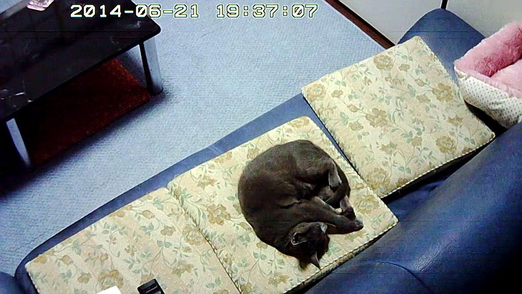 気持ち良く寝ているロシ子。