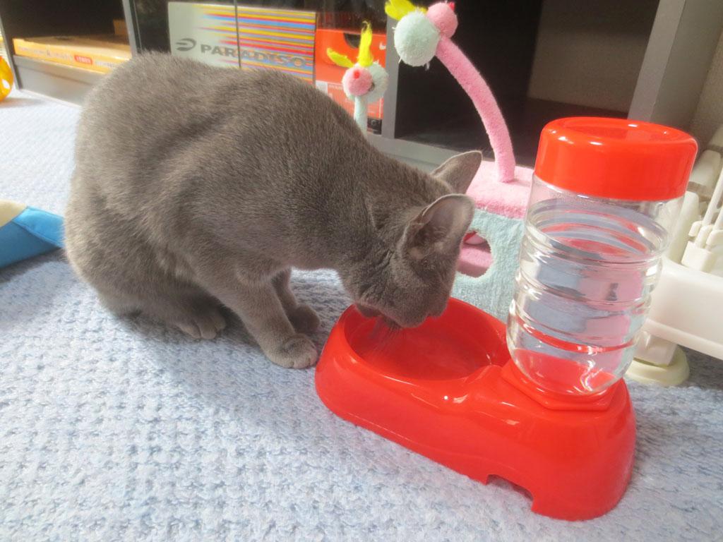 最近、よく、水を飲んでくれます。