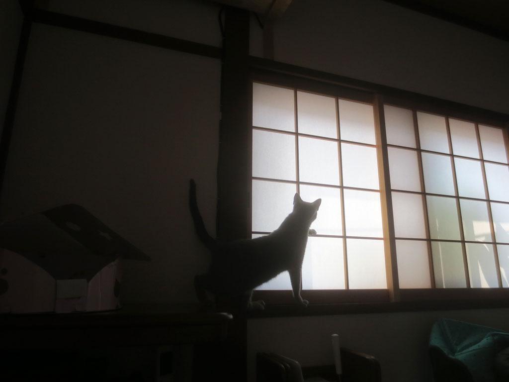 猫パンチするロシアンブルー。