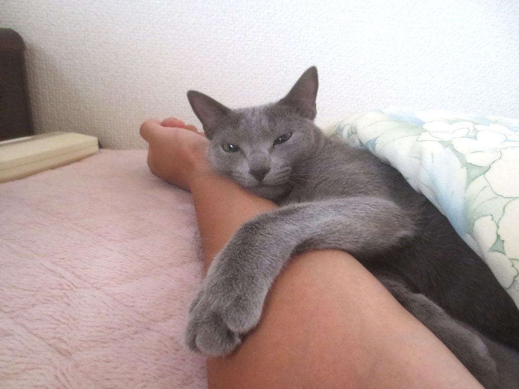 ロシ子の寝起きの顔。