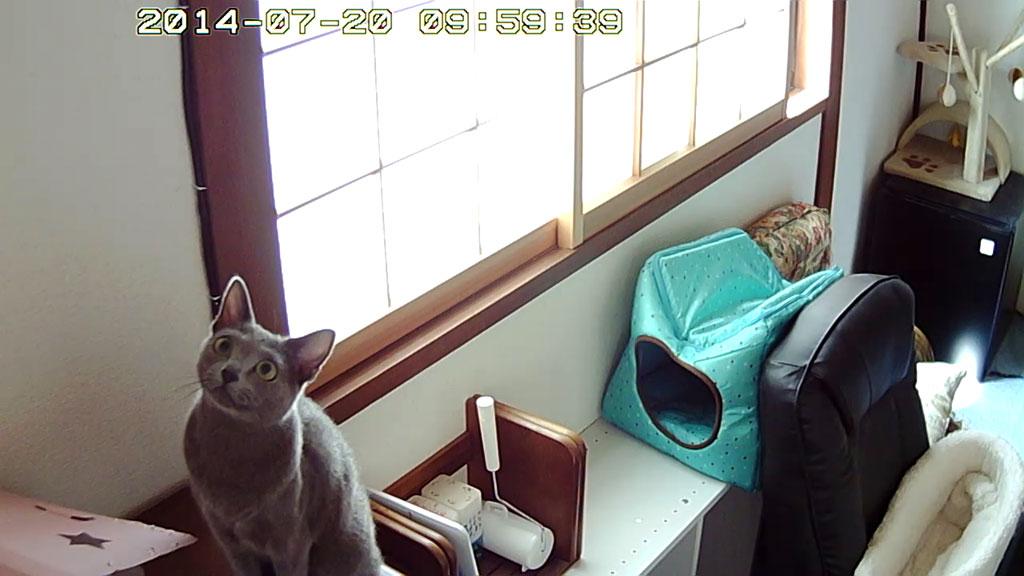 Webカメラを見るロシ子。