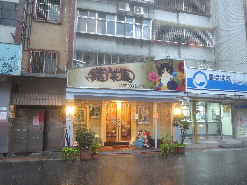 ドシャ降りの中、台湾の猫カフェへ。