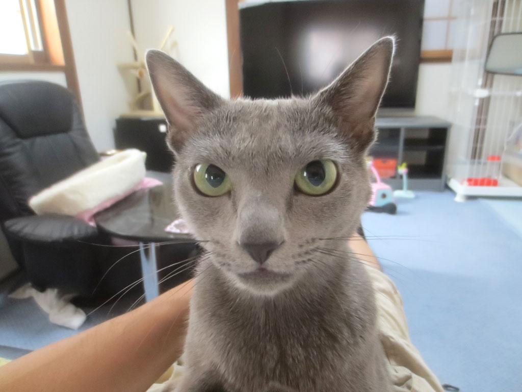本当に美猫なロシ子。