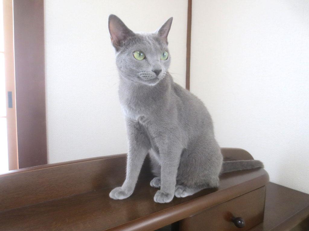 本当に猫ってかわいい。